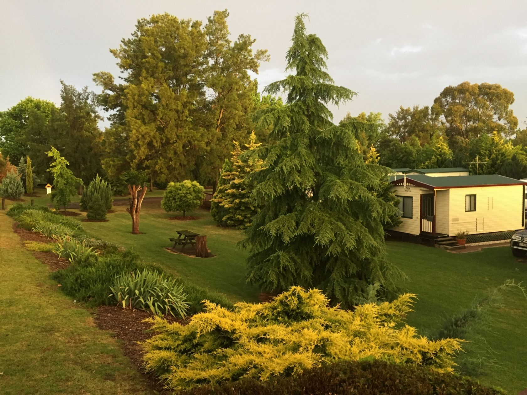 A Beauty, Freehold Caravan Park, Riverside, Nth West NSW