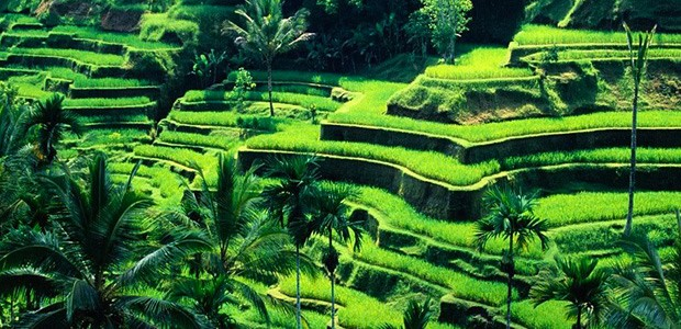 Buying a Business in Bali